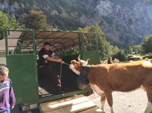 Farmer taking his gals home