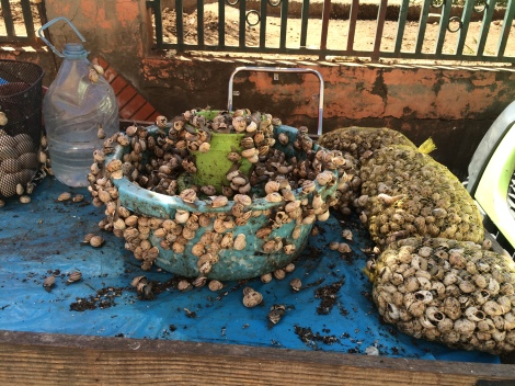 Snails for sale - a common and seemingly popular item