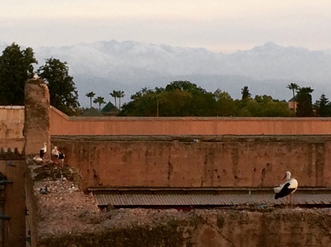 Atlas Mountains providing a romantic backdrop to busy storks!