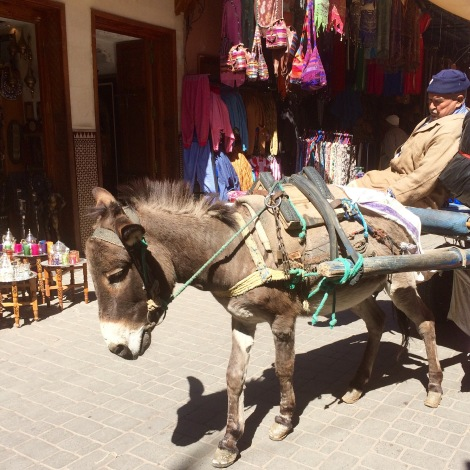 Donkeys are a key method of transporting goods in the souks