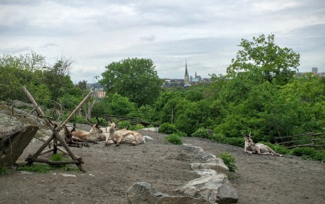 Reindeer in front of the Stockholm skyline